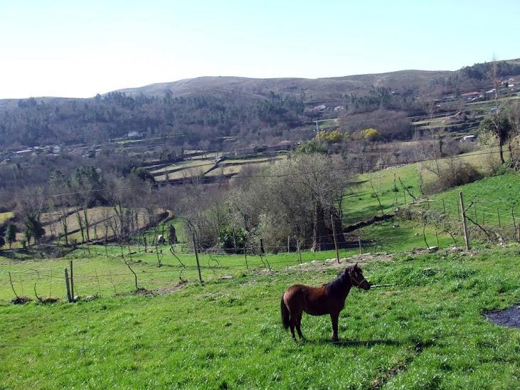 aniversario - [Crónica] 1º aniversário do M&D - Guimarães (11.03.2012) DSCF4604