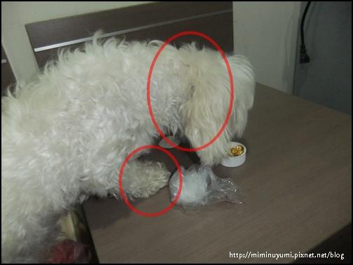 狗狗食用寵物營養品-黃金海寶油前樣子
