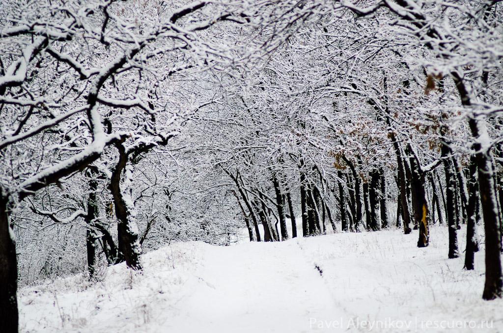 Зимний лес. Торез.