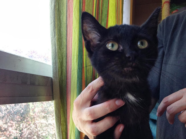 Yoko, la gata rescatada de la alcantarilla IMG_3916