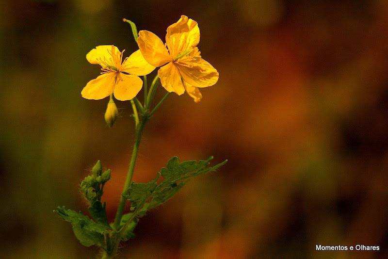 Simples, flores silvestres