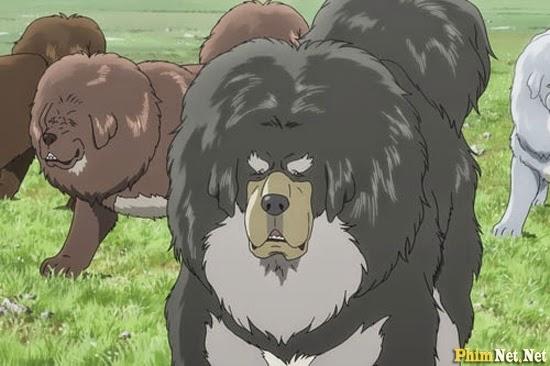 Chó Ngao Tây Tạng - The Tibetan Dog - Image 1