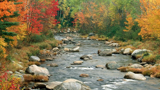 Autumn Colors, White Mountains, New Hampshire.jpg
