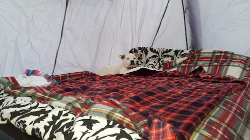 Camping  at Pentwd Uchaf