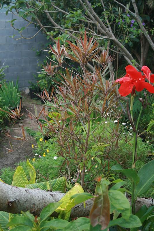 Futur jardin d'orchidées!!! IMG_3536