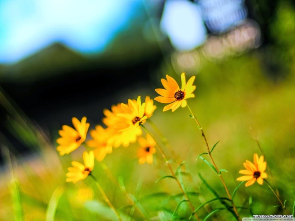 Sắc Vàng Tươi Thắm Của Các Loài Hoa Đẹp Mộng Mơ