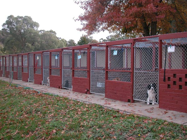 Kennel Fees For  Dogs In Uk