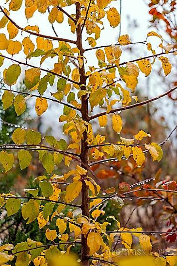Осень, фото капель