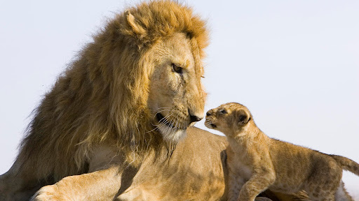 Father and Son, Masai Mara National Reserve, Kenya.jpg