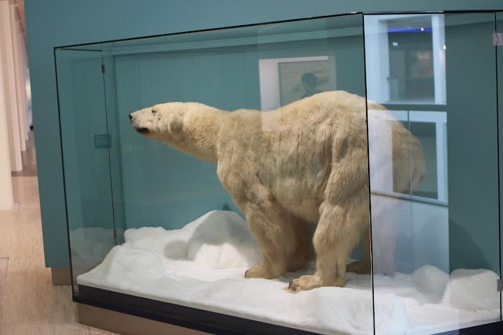 Zum Glück fehlte auch ein Eisbär nicht