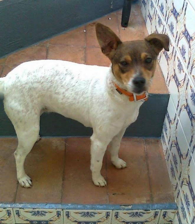 bodeguero – Adotta un cucciolo