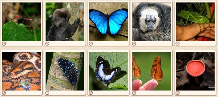 Biodiveristy photo collage. From How to get an A+ in Amazon 101