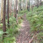 Trail through the ferns (159214)