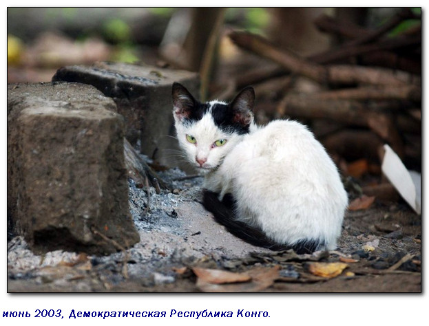 Когда-то египтяне сделали их священными животными и с тех пор кошки участвуют во всех войнах