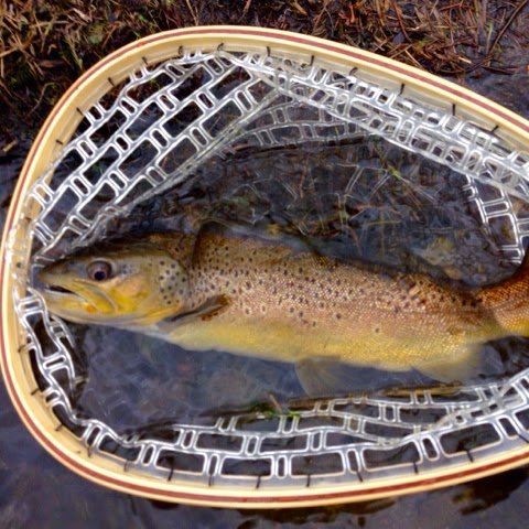 River report the farmington and a 19 wild brown for Farmington river fishing report