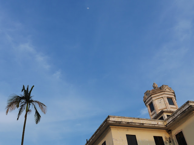 moon in blue sky above a palm tree and a building