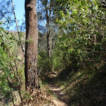 Heading through the bush (131212)