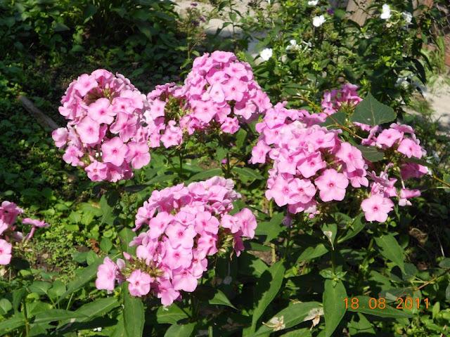 Садово-огородный дизайн  - Страница 4 DSCN0608