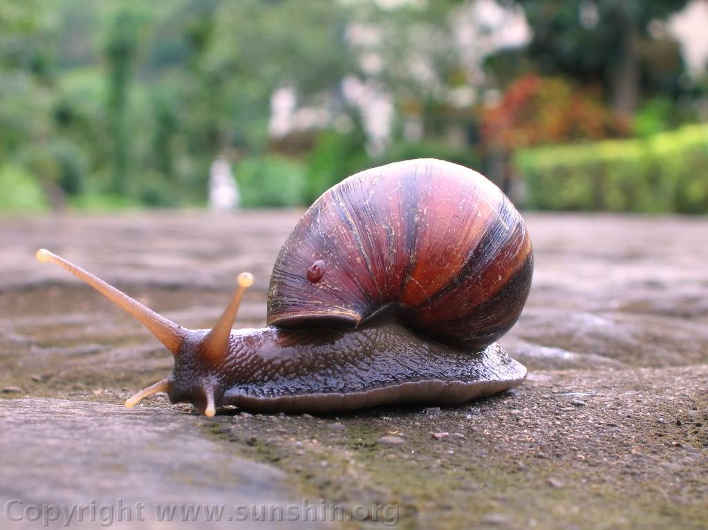 Snail on Animals And Their Habitats