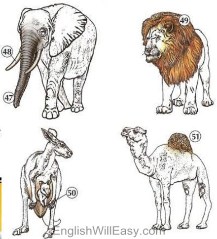 Picture Dictionary- Mammals