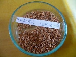 Kozłek lekarski nasiona Valeriana officinalis semen