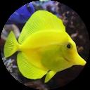 Deniz Akvaryum