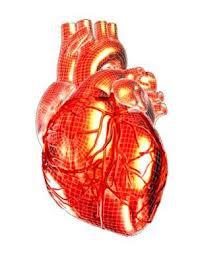 сердце лечим