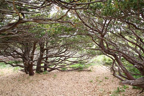 焼尻島の風景 その3