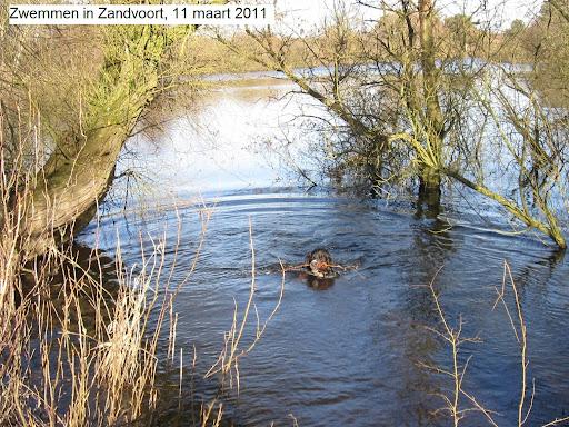 Zandvoort Bokkedoorns 11mrt2011.JPG