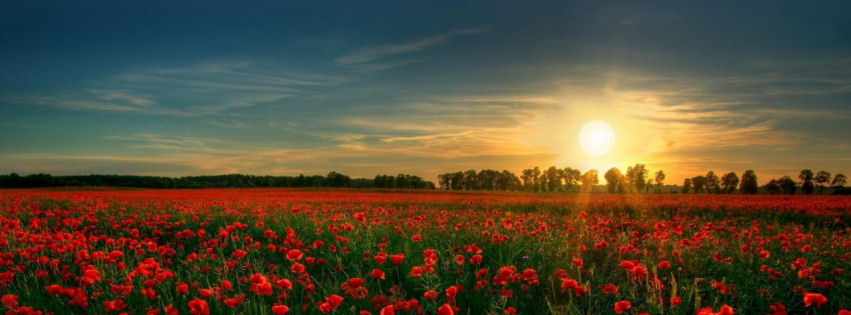 Red flower garden facebook cover