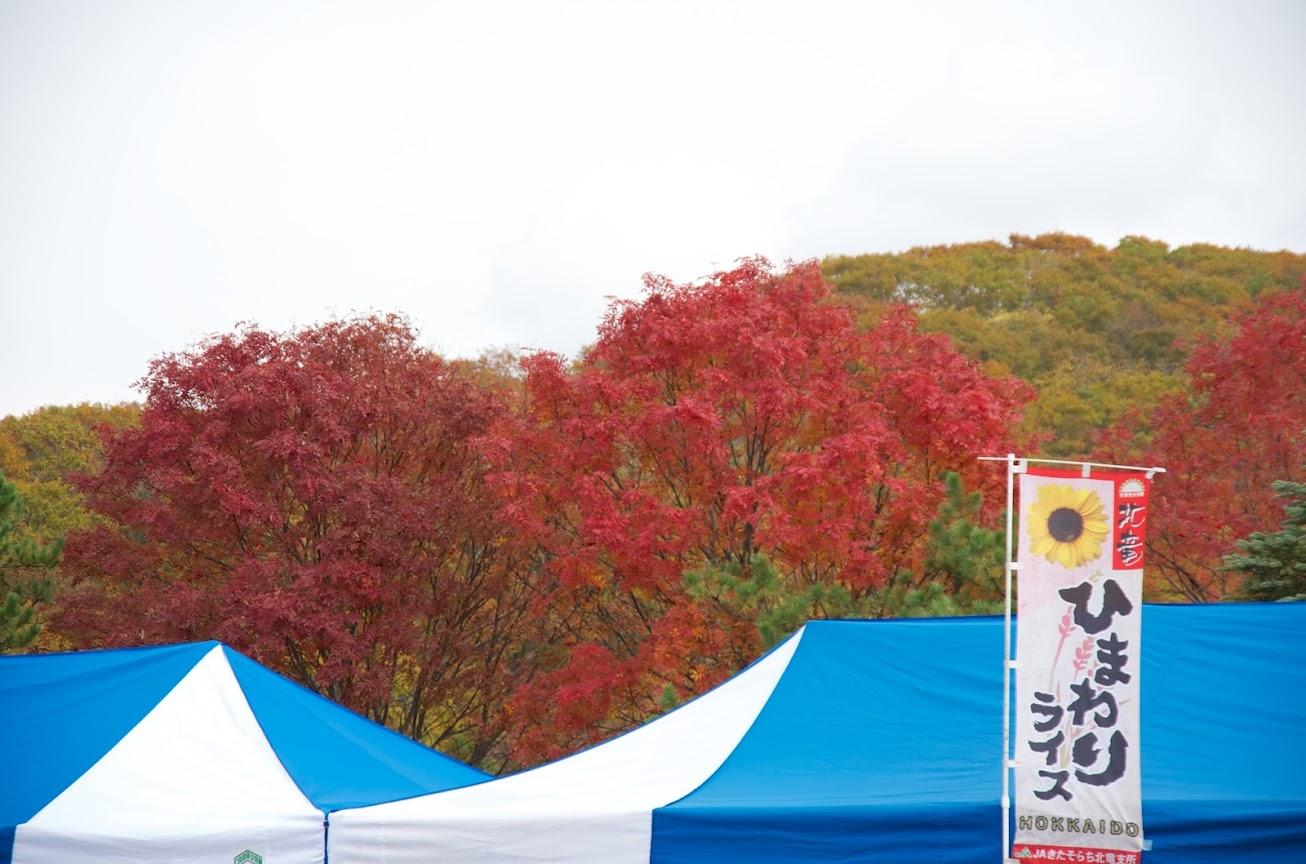 見事な紅葉