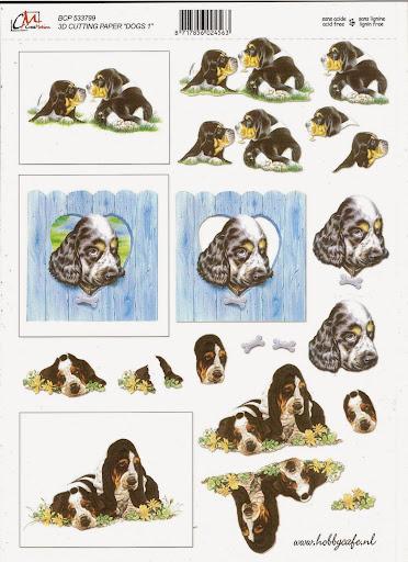 ook dieren (2).jpg