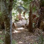 Track through palms (30161)