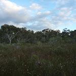 Heath on Fredericks Track (305601)