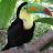 Shwetha Hridya avatar image