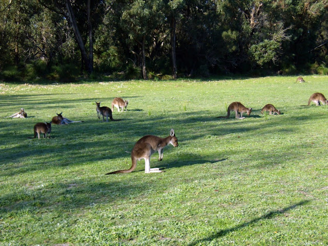Yanchept National Park