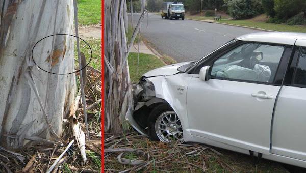 car v tree
