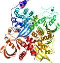 PDB-1LAR Associated subunits RPTPs (receptor protein tyr. phos.) that acts as a protein-tyrosine phosphatase Domain 1
