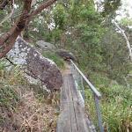 along the ridge track (90438)