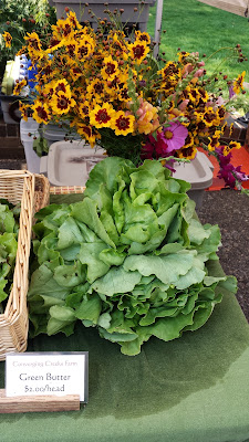 Portland Farmers Market PSU, big green butter lettuce