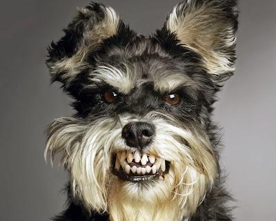 O cão do político