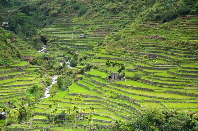 Rizières en terrasses d'Hapao