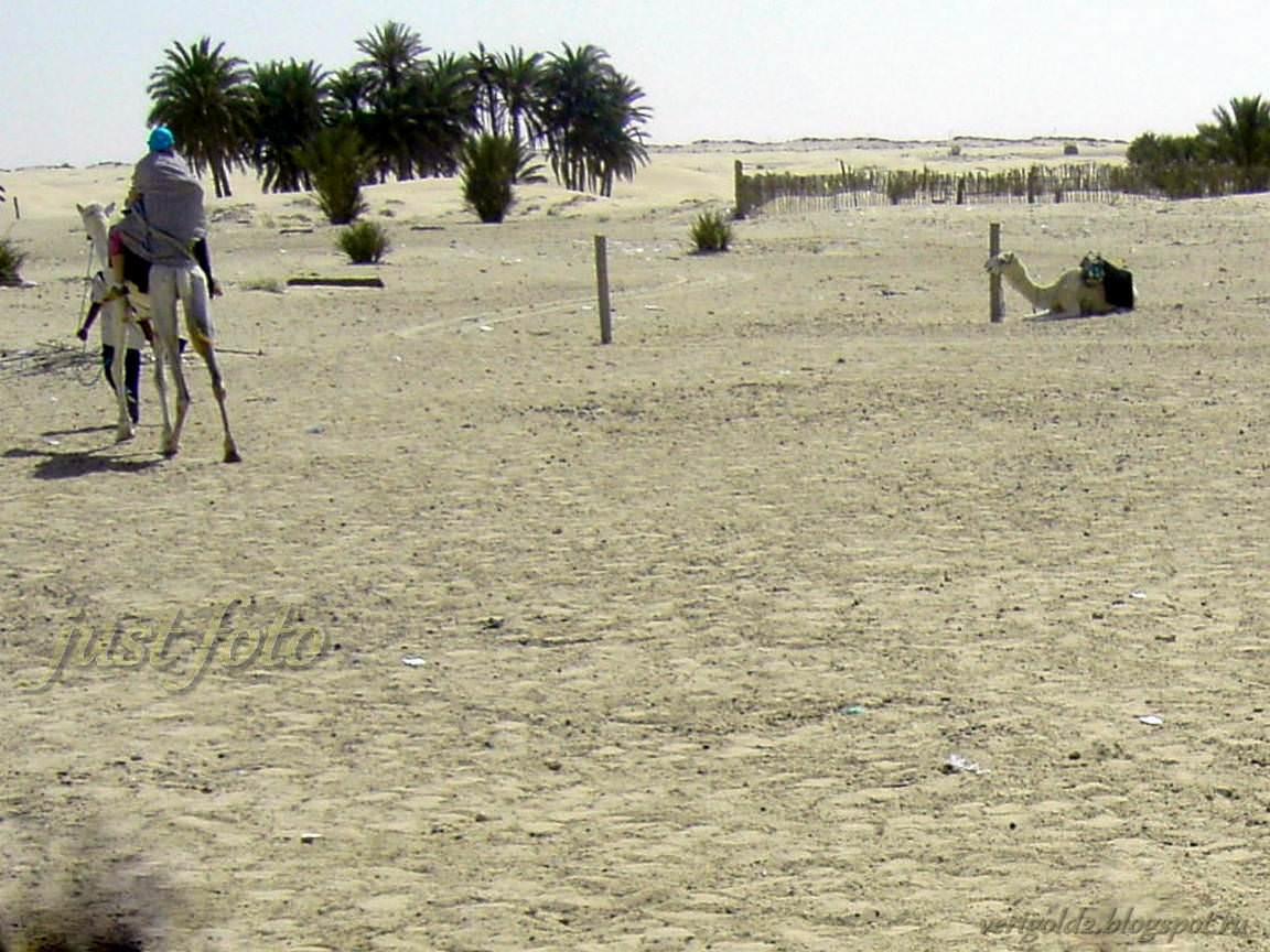 Катание на верблюде по Сахаре