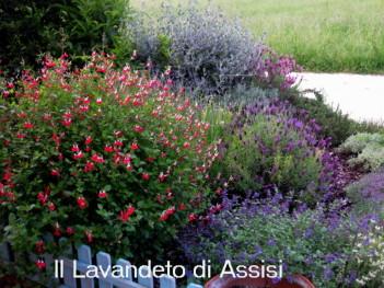 Progetti giardini online gratis progetti giardini privati for Piante da aiuola perenni