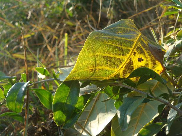 пестрый осенний лист