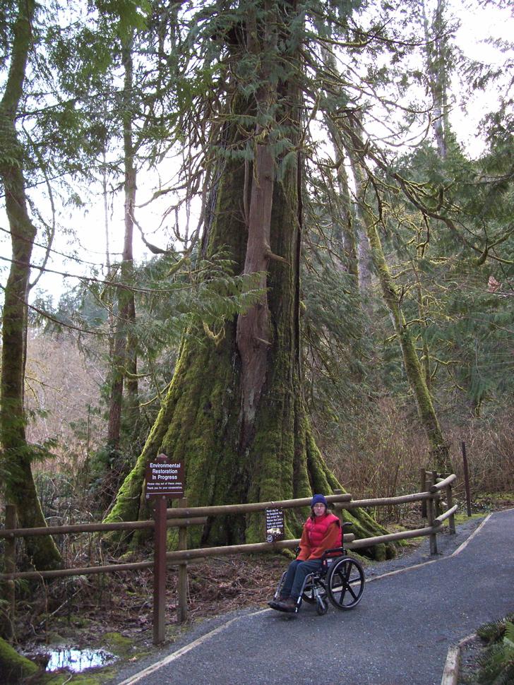 Goldstream Park Vancouver Island Ancient Cedars