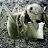 Chris H avatar image