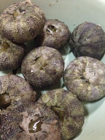 Resepi Landak Laut | Makanan Terkenal Di Sabah