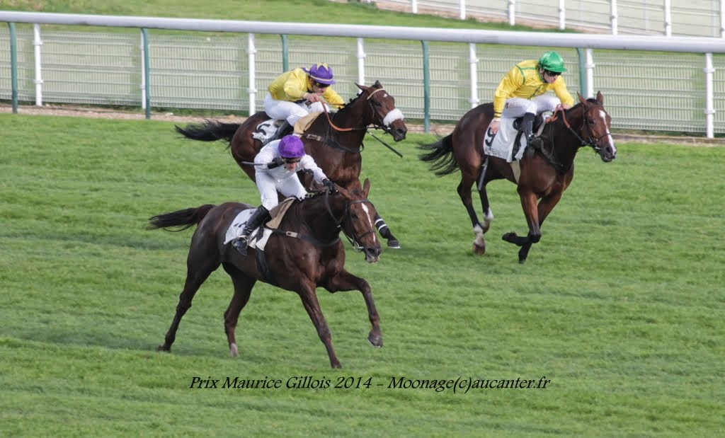 Photos Auteuil 2-11-2014 (48h de l'obstacle) IMG_5483