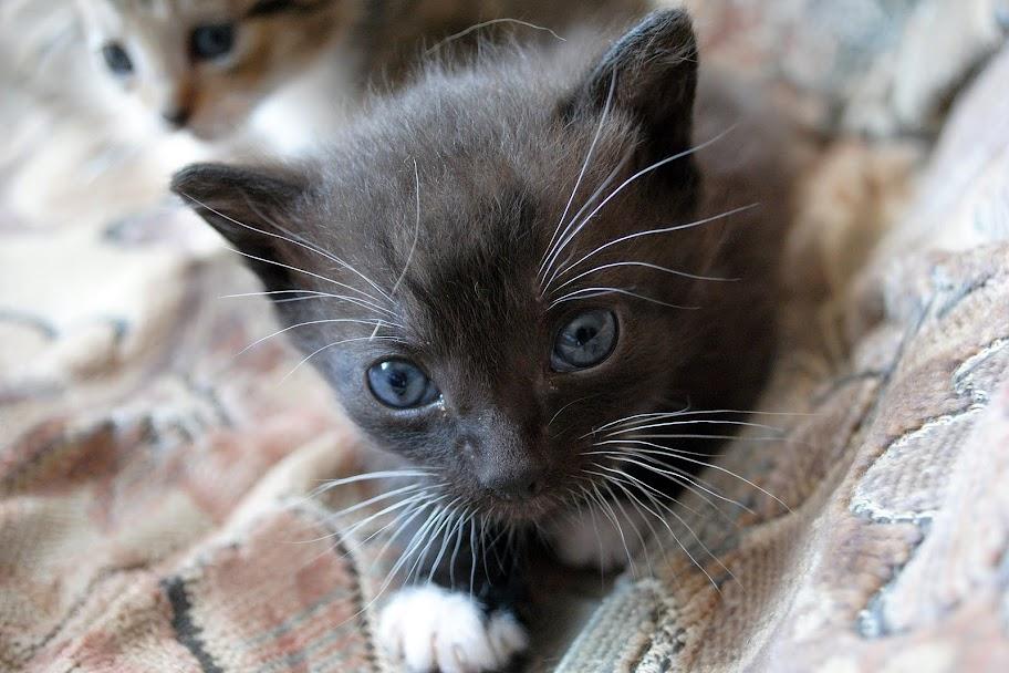 Wir suchen ein neues Zuhause (Katzen) DSC_0035